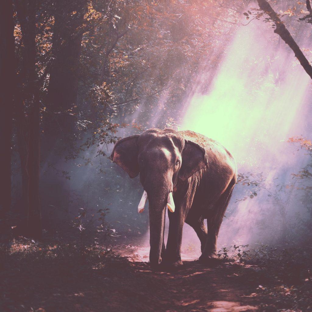 At skrive en bog er som at spise en elefant