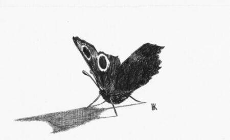 Skriv mindet sommerfugl